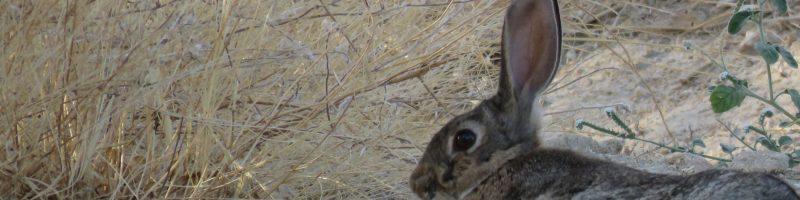 header-conejo