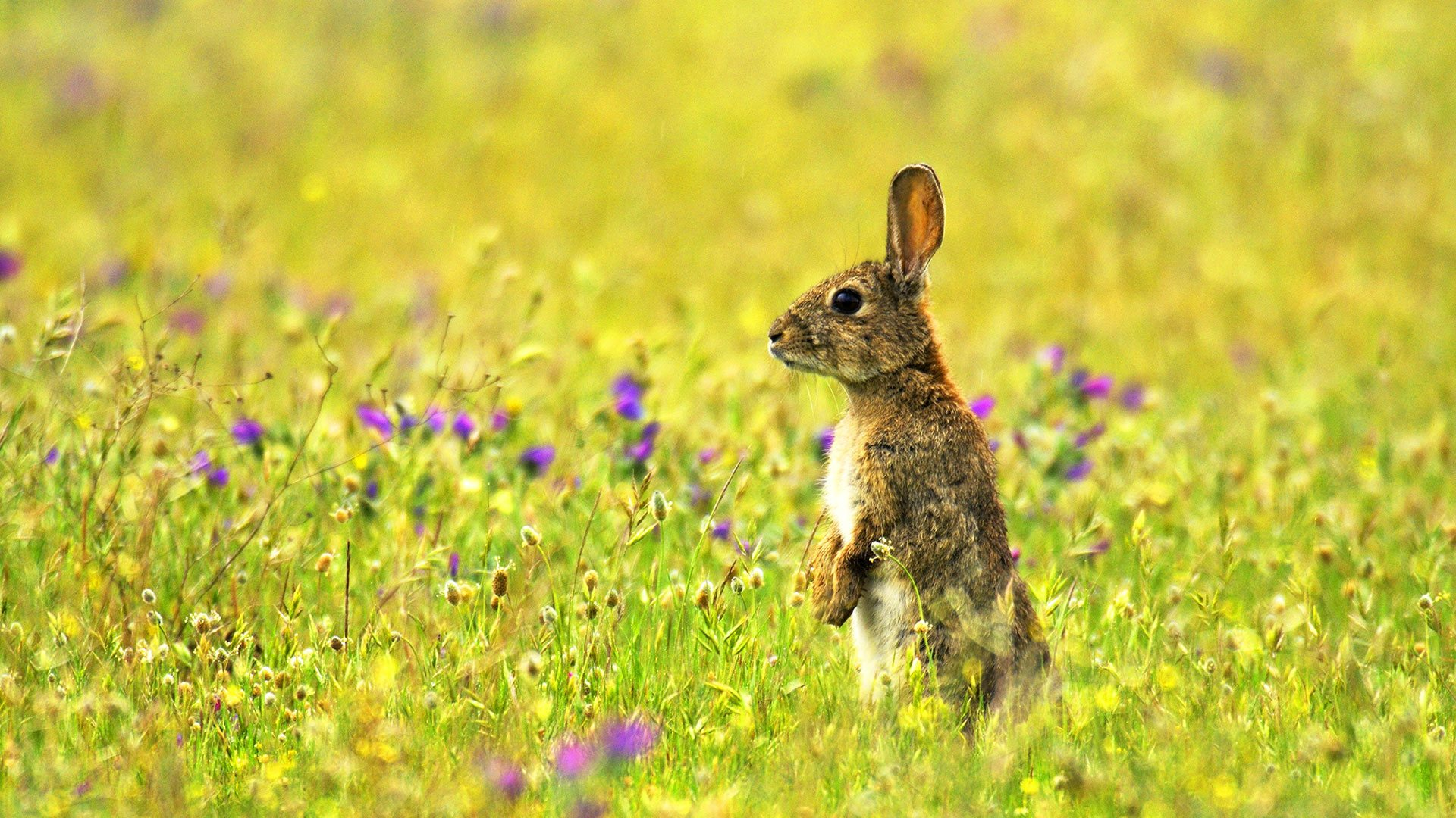 Resultado de imagen de campos de conejos